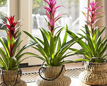 Plantas e Flores para dentro de casa