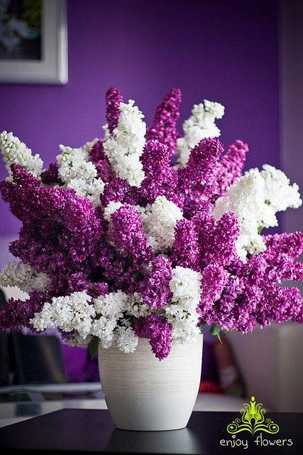 Vaso de lilac