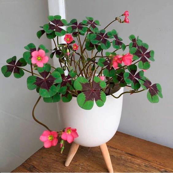 Vaso de trevo de 4 folhas