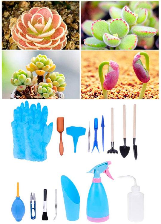 Conjunto de ferramentas de jardinagem para suculentas